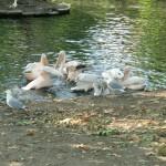 flamingos_bei_der_fuetterung_1605714873