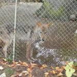 1. Zoobesichtigung mit Team Mission Varna Zoo  (4)