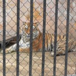 1. Zoobesichtigung mit Team Mission Varna Zoo  (7)